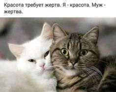 Лента по интересам. Знакомства на Tabor.ru Walk Around The World, Animals And Pets, Cats And Kittens, Jokes, Lol, Feelings, Comics, Funny, Pictures