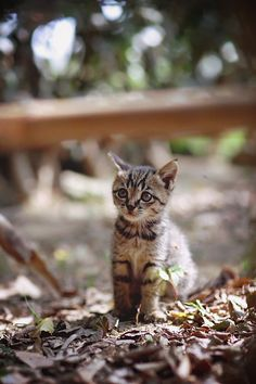 We love fall. We love kitties. What could be cuter than a kitten in fall? A fixed kitty in fall.
