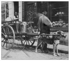 Melkboer met de hondekar rond 1900.