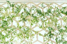 SnapDrop ceremony backdrop at #carnationfarms. Thanks to #kalebnormanjames for the floral/greenery treatment and for #truecolorsevents for the vision. #brianwaltzentertainment #snapdrop #snapdropusa #weddingdecor #stageset #roomdivider #backdrops #eventpros #eventprofs #eventstyling #seattleevents #seattleweddings by snapdropusa.  eventpros #seattleevents #stageset #snapdropusa #brianwaltzentertainment #eventstyling #carnationfarms #weddingdecor #roomdivider #seattleweddings…
