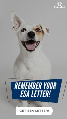 An emotional support animal letter can give you the peace of mind by ensuring that your ESA stays by your side. ESAs can improve the mental health of their owners by lessening symptoms through their companionship. Yorkie Dogs, Pet Dogs, Puppies, Esa Letter, Antique Display Cabinets, Animal Letters, Emotional Support Animal, Pit Bulls, Cute Funny Animals