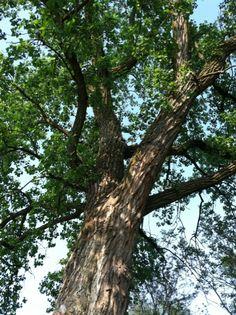 # tree