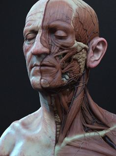 New Art Reference Poses Men Human Anatomy Ideas Facial Anatomy, Head Anatomy, Anatomy Poses, Anatomy Study, Body Anatomy, Anatomy Reference, Art Reference Poses, Anatomy Of The Face, Face Muscles Anatomy