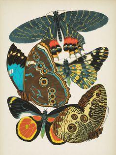 Vintage Butterfly Illustration EA Seguy Papillon All Over Graphic Tee by EnShape - Medium Scientific Illustration, Illustration Print, Art, Artwork, Art Nouveau, Illustration, Retro Graphics, Original Art, Prints
