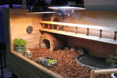 Get the complete guide on how to care for bearded dragons. Learn habitat setup, feeding, health, breeding, and more. Tortoise Cage, Tortoise House, Tortoise Habitat, Turtle Habitat, Baby Tortoise, Sulcata Tortoise, Tortoise Enclosure, Turtle Enclosure, Reptile Enclosure