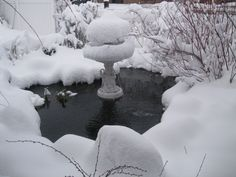 Pond in the snow. (Prospect Valley Hospitality renovated historic 1872 property, Wheat Ridge, Colorado, USA)