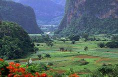 Vinales, Cuba - setting for Caribbean Freedom, third & final Island Legacy Novel (releases April 6, 2013). For more info: www.terimetts.com. Ck under Novels.