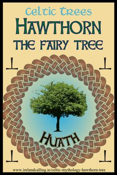 The Hawthorn is Known in Ireland as the fairy tree. It is often referred to as the gentle bush, lone bush or thorn, as it is disrespectful to mention the fairies by name. Find out more...