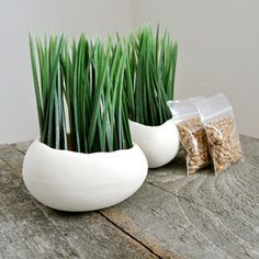 Egg Sprouts Set Of 2
