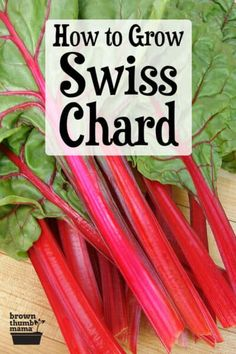 Garden Drawing Swiss Chard is a beautiful and prolific vegetable that is easy to grow. Learn everything you need to know about planting, growing, and harvesting chard with this comprehensive guide.