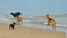Cooling off at the beach at Seapauling in Norfolk
