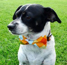 Bow Tie Dog Collars - Orange Argyle