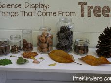 Tree & Leaf Science Activities, Tree Life Cycle for Preschool, Pre-K Things That Come from Trees: Science Display Science Center Preschool, Fall Preschool, Kindergarten Science, Preschool Classroom, Science For Kids, Science Activities, Science Nature, Creative Curriculum Preschool, Science Table