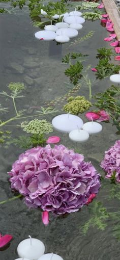 Creations, Plants, Flowers, Plant, Planting, Planets