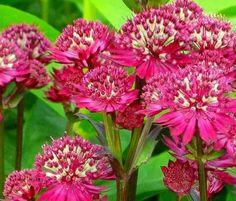 Не потеряйте! Следующим летом ваш участок будет утопать в цветах все лето! Многие мечтают о цветниках и декоративных клумбах,которые не будут отнимать много времени,сил и отвлекать от работы в саду и …