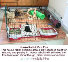 This house rabbit won't be getting bored any time soon, he has lots of things to keep him occupied and he's safe and protected inside his wire run.