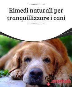 143 fantastiche immagini su Cane | Cani, Animali e Animali