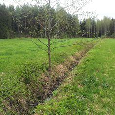 Tavallaan muotoilua tämäkin - elämäntapa - pelto AFTER - jätin yhden keijupuun...
