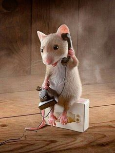 Ava Mouse always on her phone Ava Mouse always on her phone - Animals wild, Animals cutest, Animals funny, Animals drawings Needle Felted Animals, Felt Animals, Cute Baby Animals, Animals And Pets, Funny Animals, Art Quotes Funny, Funny Art, Quote Art, Cute Animal Pictures