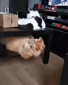 Funny Animal Videos, Funny Animal Pictures, Cute Funny Animals, Cute Baby Animals, Animals And Pets, Funny Cats, Nature Animals, Beautiful Cats, Animals Beautiful