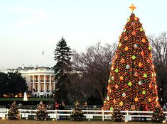 The National Christmas Tree in Washington, DC. Have some great photo's of Michael & Lauren sitting on this fence in front of White House, Washington, DC. Dec. 2001