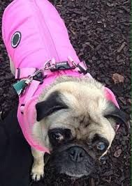 Puppia Fleece Lined Pink Mountaineer Coat Available At Www