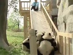 かわいいパンダが滑り台から転ぶGIF動画 created by minerva_repellendus