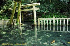 御手洗池1鹿島神宮