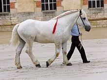Hunter equitation horses for sale