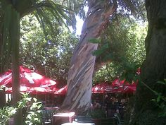 Lunch The Eleven-Egg Omelette at The Company Gardens with Seven Fashionable Women The Eleven, Eat Lunch, Cape Town, Getting Old, Gardens, Tea, Plants, High Tea, Getting Older
