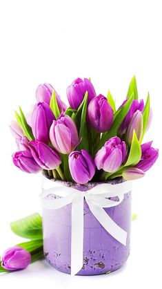 Gorgeous photo of these vibrant purple tulips.  The contrast between the purple flowers and the bright green leaves is very striking.