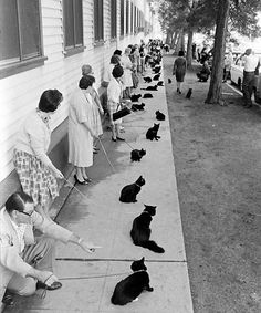 Auditions for black cats in Hollywood, 1961(via LIFE & Retronaut)