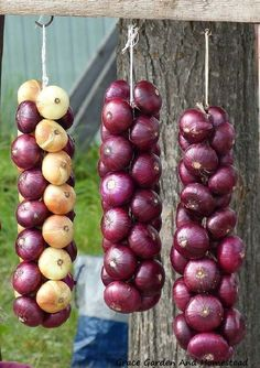 Heres an easy and quick tutorial for learning how to braid onions and store them for a long time. Excellent pictures walk you through the process. - Gardening Is Life