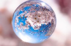 sakura globe Glass Photography, Reflection Photography, Abstract Photography, Macro Photography, Bubble Pictures, Cool Pictures, Cool Photos, Crystal Sphere, Crystal Ball