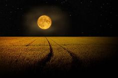 Full moon over the field.