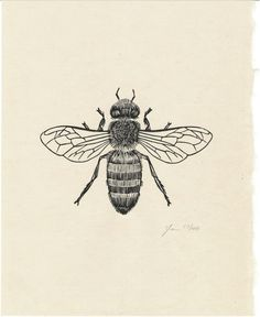 "Honey Bee ~ Woodcut Prints by Graham Blair. Honey bee tattoo inspiration. Inspired by Ed sheeran lyric ""honey, your soul could never grow old... it's evergreen."""