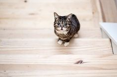 Watching Lil Bub Succeed In Climbing 15 Steps Is The Most Inspirational Thing You'll See Today
