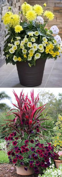 Learn the designer secrets to these beautiful planting recipes. 24 stunning container garden designs with plant list for each and lots of inspirations! - A Piece Of Rainbow http://www.apieceofrainbow.com/container-garden-planting-designs/ Flower Containers, Plants For Containers, Container Gardening, Gardening Tips, Organic Gardening, Gardening Services, Gardening Vegetables, Gardening Quotes, Indoor Gardening