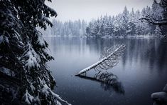 Download wallpapers winter, mountain lake, forest, snow, frost, Switzerland