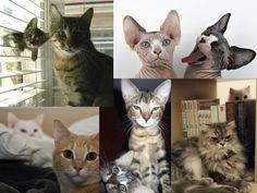Cats photobombing cats