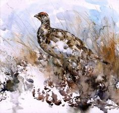 Ptarmigan  by Lucy Newton
