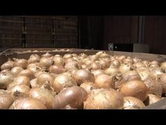 Vidalia Onions are one of the signature crops grown in Georgia each year, and consumers eagerly await their arrival in farm markets and grocery stores.  This year, Mother Nature didn't cooperate very well with the state's Vidalia growers.  The Monitor's Damon Jones visited Toombs County, in the heart of onion country, to see how this crop has fared.