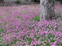 modern lawn alternatives california - Google Search