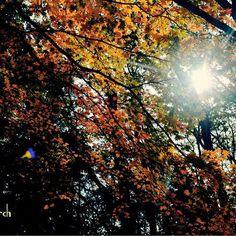 【lucola_march_】さんのInstagramの写真をピンしています。《* #紅葉 #森 城巡りで山城に行った時のです🏯 #逆行 綺麗でした🍁 * 夏草や 兵どもが 夢の跡 * らしくなく、芭蕉の句を思い出しました。 * 📆201511下旬 * #林 #晩秋 #秋 #秋空 #小谷城 #誰かに見せたい風景 #autumn #Shiga #NikonD5200 #wu_japan #team_jp_#team_jp_東#icu_japan#Lovers_Nippon#IGersJP#jp_gallery#wp_japan#PHOS_JAPAN#bestjapanpics#カメラのキタムラ#東京カメラ部 #9Vaga9#team_jp_flower#lovely_flowergarden#WP_flower#はなまっぷ》