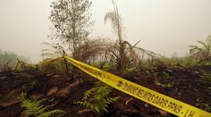 126 Orang Ditetapkan Sebagai Tersangka Pembakaran Hutan | Majalah Kartini