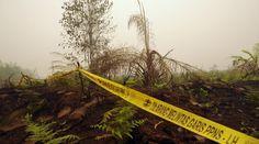 126 Orang Ditetapkan Sebagai Tersangka Pembakaran Hutan   Majalah Kartini