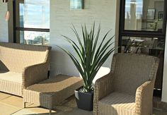 Artificial large Green Pandanus plant in Lechuza Quadro in Anthracite
