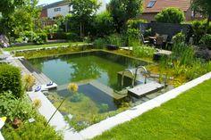 natural pool - Backyard Paradise