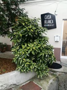 #CasaBlanca #Croatia #Zagreb #interior #exterior #rooms #BedandBreakfast #CasaBlancaBoutiqueBnB #Boutique #BnB #Zagreb #Vlaska92