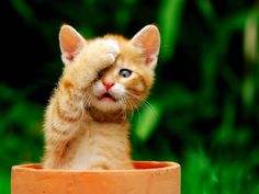 6 Pictures of Funny yet Adorable kittens5
